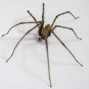 Richmond Pest Control Professional Bug Extermination Staten Island NY