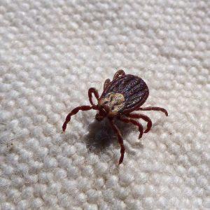 Richmond Pest Control Bug Extermination Company Staten Island NY