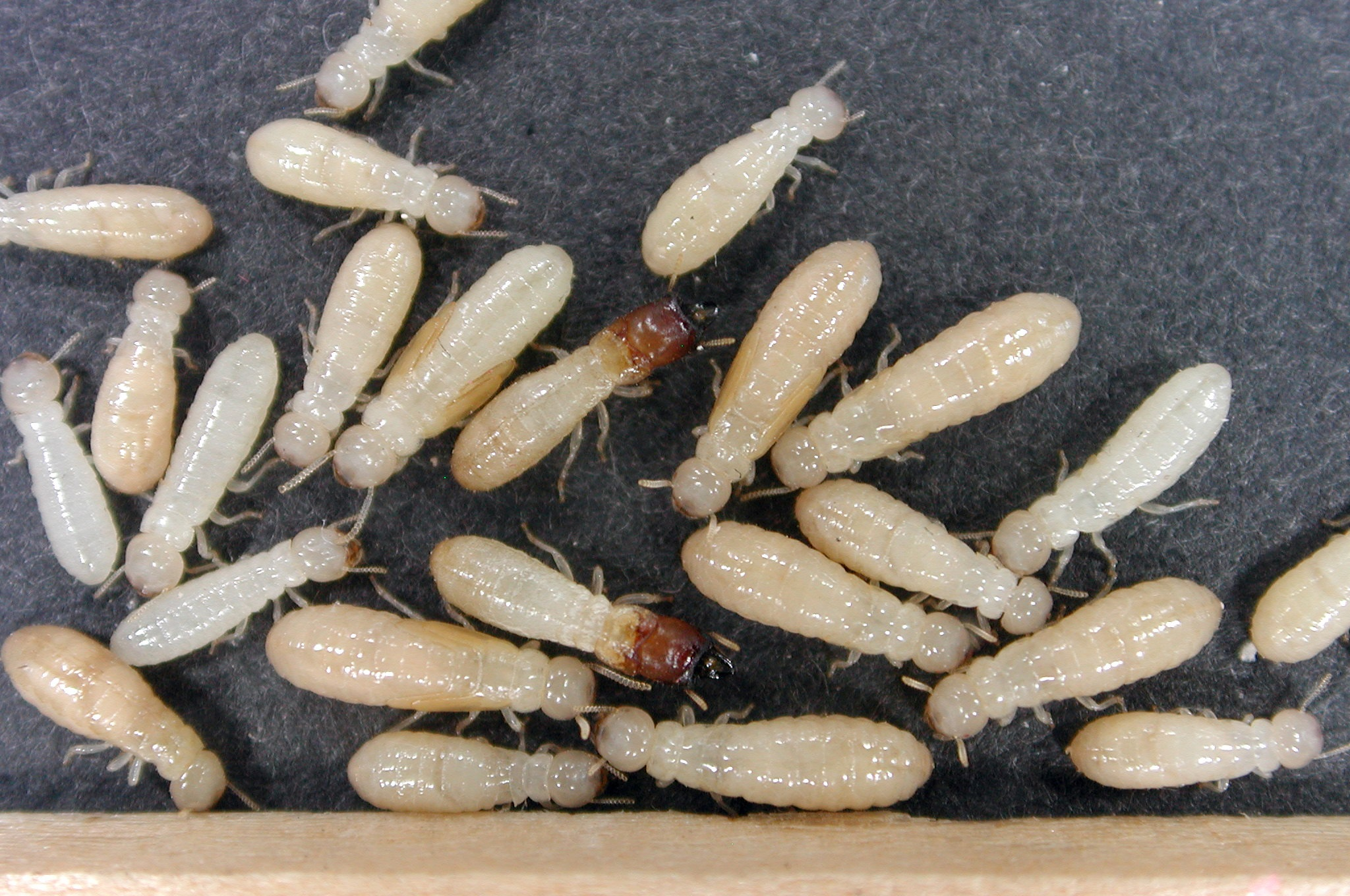 Richmond Pest Control Staten Island Pest Control Company