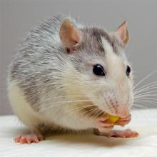 Richmond Pest Control Mice & Pest Control Staten Island NY