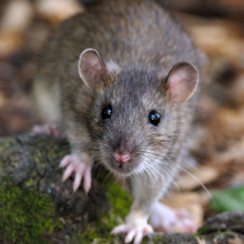 Richmond Pest Control Rodent & Pest Control Staten Island NY