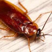 Richmond Pest Control Staten Island NY Pest Extermination