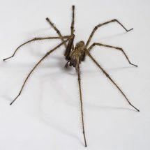 Richmond Pest Control Bug & Pest Extermination Company Staten Island NY