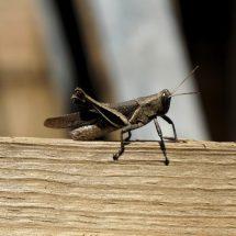Richmond Pest Control Staten Island NY Pest Extermination Company