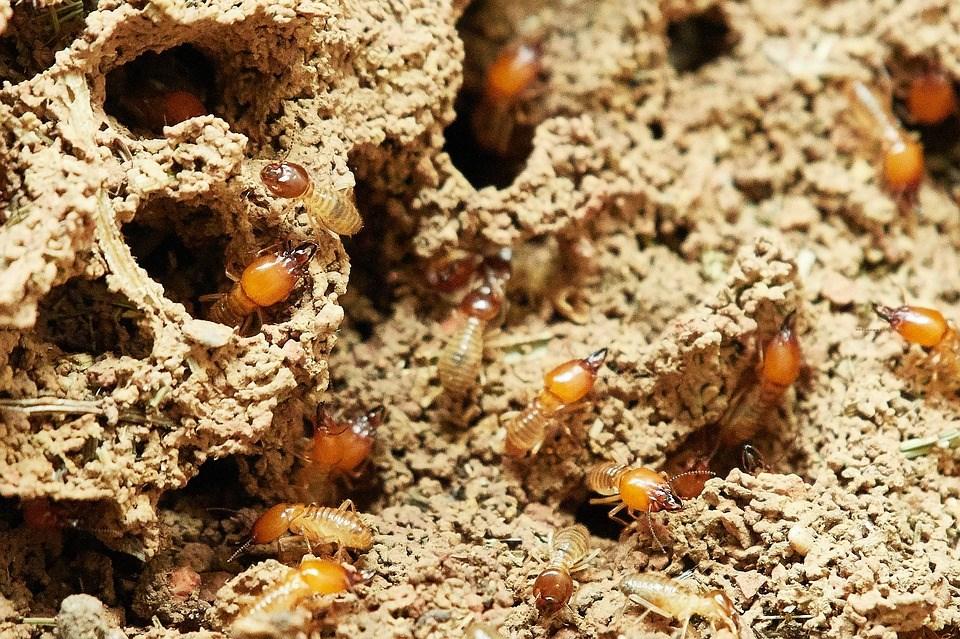 Richmond Pest Control Staten Island NY Termite Extermination