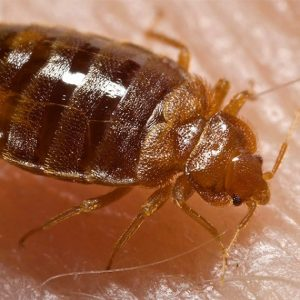Syracuse Bed Bug Removal