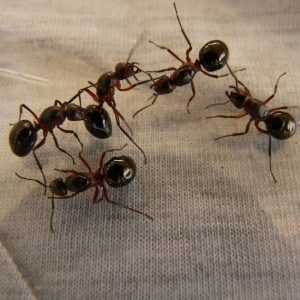 Insect Pest Control Company Staten Island NY