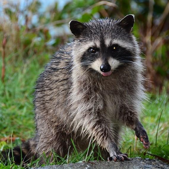Wildlife Pest Removal Staten Island NY
