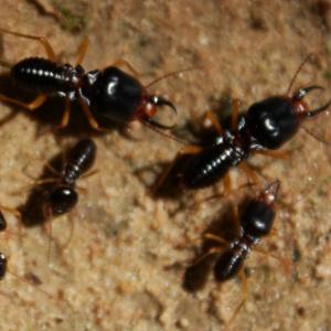 Richmond Pest Control Termite Pest Control in Staten Island NY