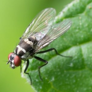 Richmond Pest Control Flying Insect Pest Control Services near me