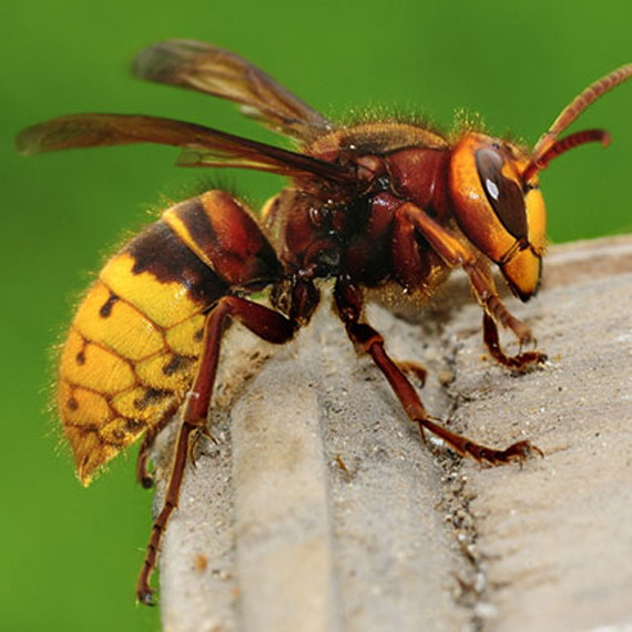 Richmond Pest Control Stinging Insect Pest Control Staten Island NY
