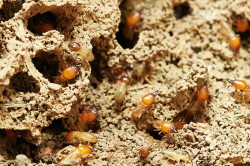 Richmond Pest Control Termite Prevention Tips