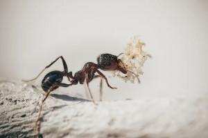 Richmond Pest Control Effective Ant Pest Control Methods