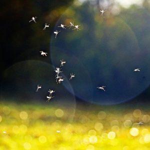 Richmond Pest Control Backyard Mosquito Control Treatment Staten Island NY