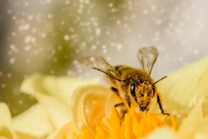 Richmond Pest Control Fascinating Honey Bee Facts