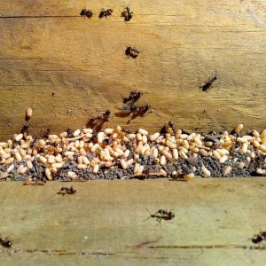 Richmond Pest Control Ant Infestation Control Staten Island NY